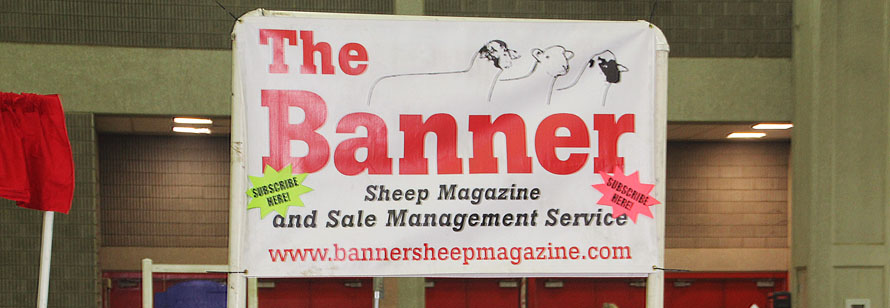 Call Banner Sale Management to get your sheep sold!